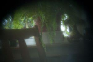 Ferns hothouse pinhole