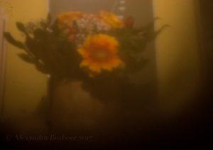 Bosbeer flower still life