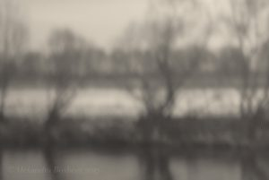 Pinhole palladium winter trees by river